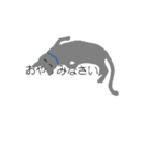 吹き出し『ロシアンブルー』(猫シルエット)(個別スタンプ:12)