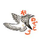ヤマセミ山ちゃん(個別スタンプ:1)