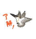 ヤマセミ山ちゃん(個別スタンプ:2)