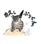 ヤマセミ山ちゃん(個別スタンプ:4)