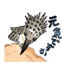 ヤマセミ山ちゃん(個別スタンプ:6)