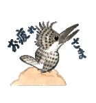 ヤマセミ山ちゃん(個別スタンプ:8)