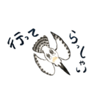 ヤマセミ山ちゃん(個別スタンプ:11)