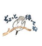 ヤマセミ山ちゃん(個別スタンプ:14)