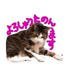 猫の形ていねい語スタンプ時々関西弁~実写(個別スタンプ:04)