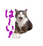 猫の形ていねい語スタンプ時々関西弁~実写(個別スタンプ:06)