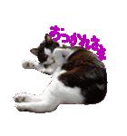 猫の形ていねい語スタンプ時々関西弁~実写(個別スタンプ:07)