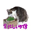 猫の形ていねい語スタンプ時々関西弁~実写(個別スタンプ:08)