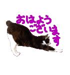 猫の形ていねい語スタンプ時々関西弁~実写(個別スタンプ:12)