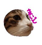 猫の形ていねい語スタンプ時々関西弁~実写(個別スタンプ:18)