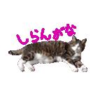 猫の形ていねい語スタンプ時々関西弁~実写(個別スタンプ:19)