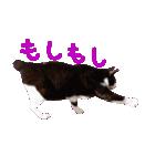 猫の形ていねい語スタンプ時々関西弁~実写(個別スタンプ:20)