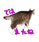 猫の形ていねい語スタンプ時々関西弁~実写(個別スタンプ:21)