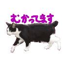 猫の形ていねい語スタンプ時々関西弁~実写(個別スタンプ:22)