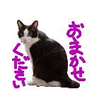 猫の形ていねい語スタンプ時々関西弁~実写(個別スタンプ:23)