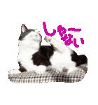 猫の形ていねい語スタンプ時々関西弁~実写(個別スタンプ:25)