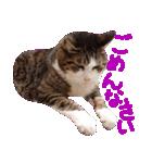 猫の形ていねい語スタンプ時々関西弁~実写(個別スタンプ:28)