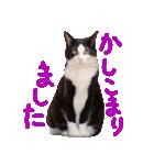 猫の形ていねい語スタンプ時々関西弁~実写(個別スタンプ:29)