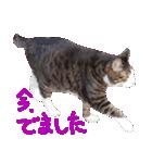 猫の形ていねい語スタンプ時々関西弁~実写(個別スタンプ:32)