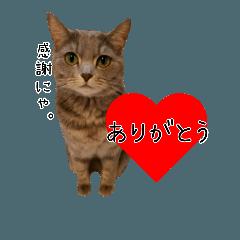 かわいいグレ猫マム☆シンプル写真スタンプ
