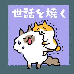 世話を焼くネコ