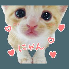 かわいい猫の写真スタンプ