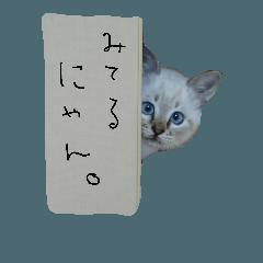 ネコの葵ちゃん