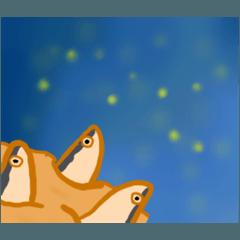 空を見上げるパイ