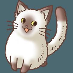 猫大好き!4 シャム猫編