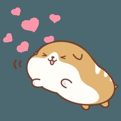 バゲット犬 パンムン