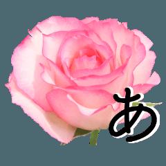 感謝の気持ちに花を♪バラ・セット2