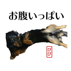 B&P-DOG