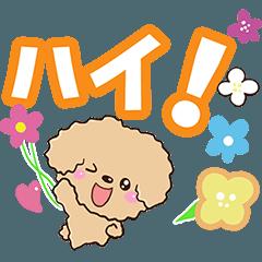 トイプードル【アプリコット お返事編】