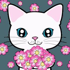 MeowMeowHouseの白猫さん