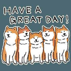 Every Day Dog 柴犬
