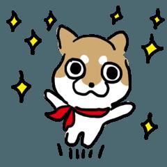柴犬アンちゃん