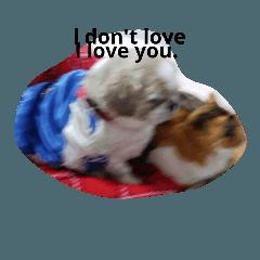 犬は、猫を愛している。