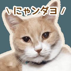 ラテ・レオ・モカの猫スタンプ 写真ver