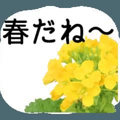 暮らしに花を♪春の花