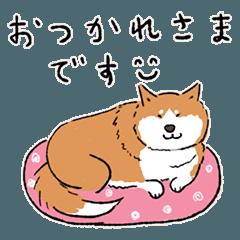 Every Day Dog 柴犬 日本語