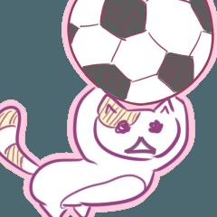サッカー猫