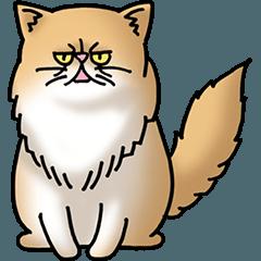 猫大好き!その8(ペルシャ)