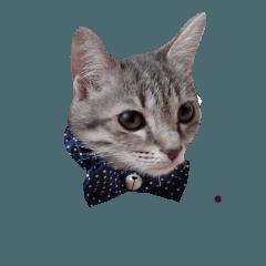 サバトラ猫ルナちゃん