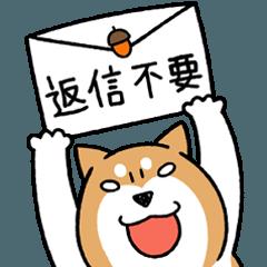 柴犬どんぐり【その2】