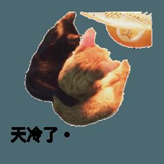 Cats : Hunter and Lulu