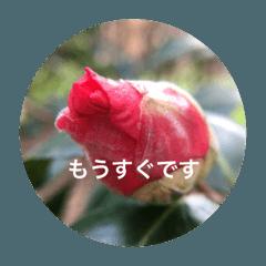 春待ちの植物で待ち合わせ会話