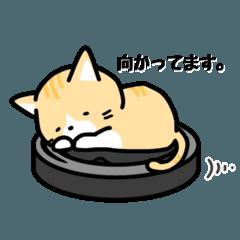 猫の茶太郎