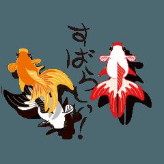 [LINEスタンプ] 動く金魚をペットに。1〜3匹が泳ぎます。 (1)