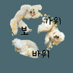 おうちプードルの韓国語でジャン犬ポン