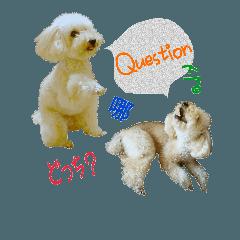 おうちプードルが多言語「はい、いいえ」2